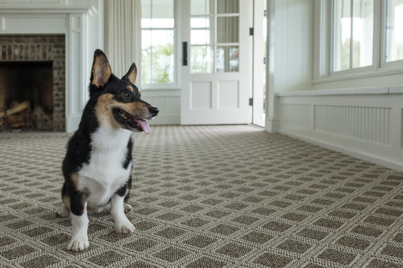 Pet friendly floor | Carpet Your World